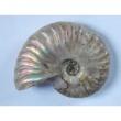 Ammonitesz gyöngyházfényű - Kristály Centrum