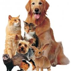 NaturVet Állatorvosi Rendelő