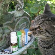 Vezér Állatorvosi Rendelő