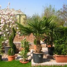 New Garden Kertészet - Zugló